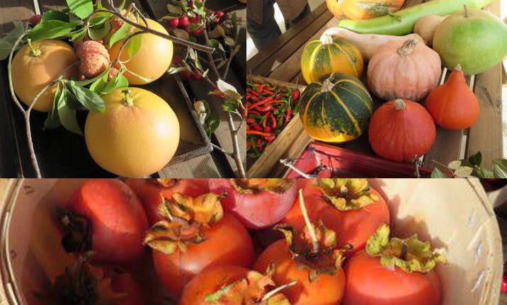 CCAS : visite au jardin botanique fruitier d'Avapessa