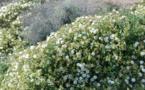 CCAS : Sortie botanique le 31 octobre 2020