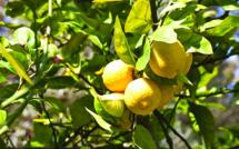 Conférence sur les pesticides : informations complémentaires